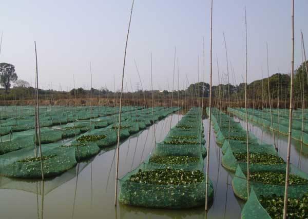 江门泥鳅养殖成本
