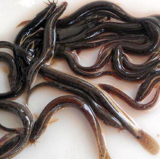 宿迁泥鳅养殖方法