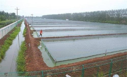中山泥鳅养殖基地