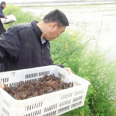 黔东南小龙虾苗供应