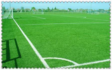 泉州足球场草坪网