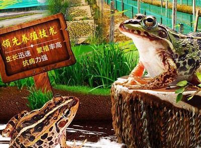 郴州养殖青蛙技术
