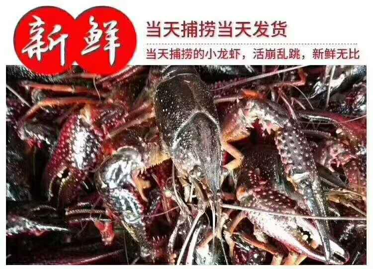 定西龙虾养殖培训价格