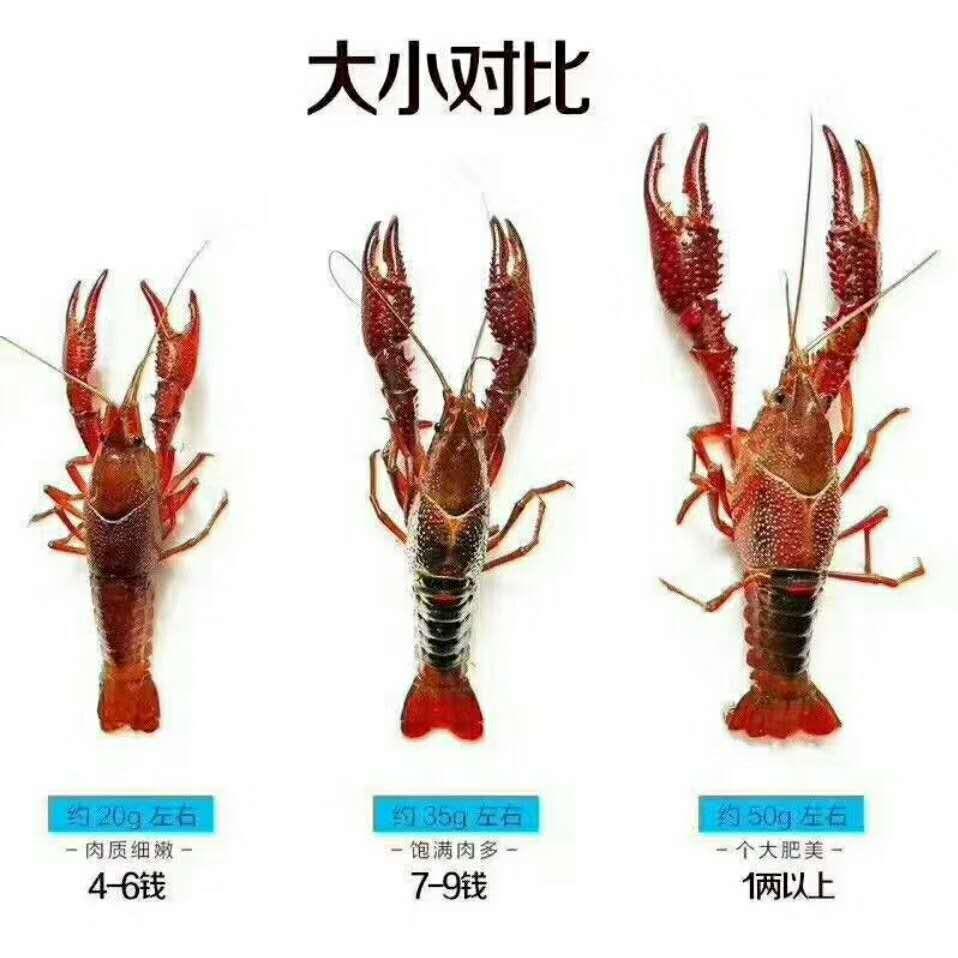 桂林龙虾养殖培训学校