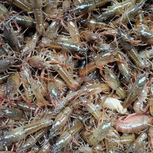 防城港龙虾养殖培训学校