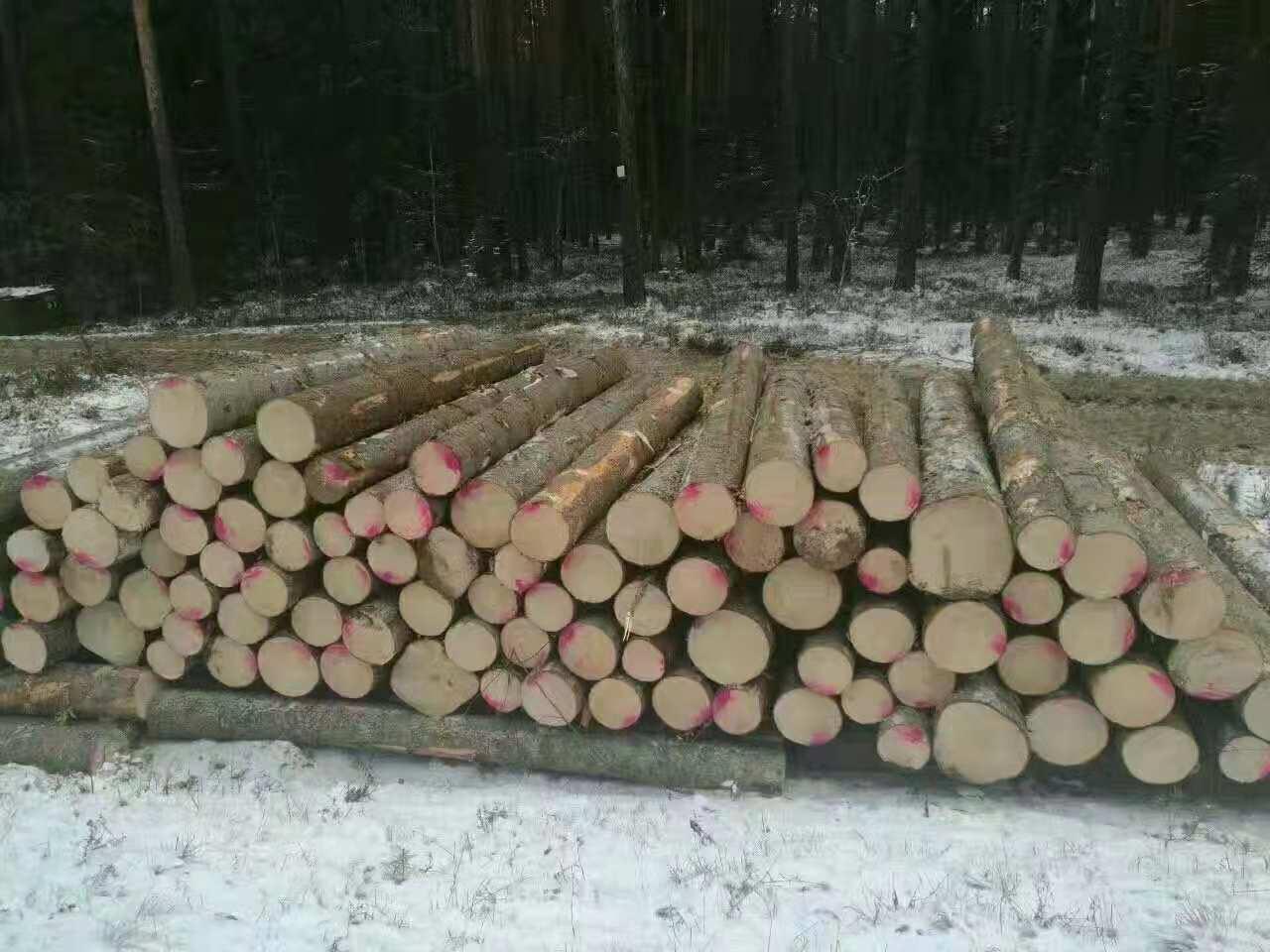 宁夏芬兰木经销商