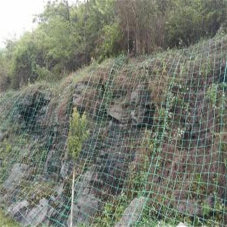 呼和浩特绿色双向塑料格栅爬藤网
