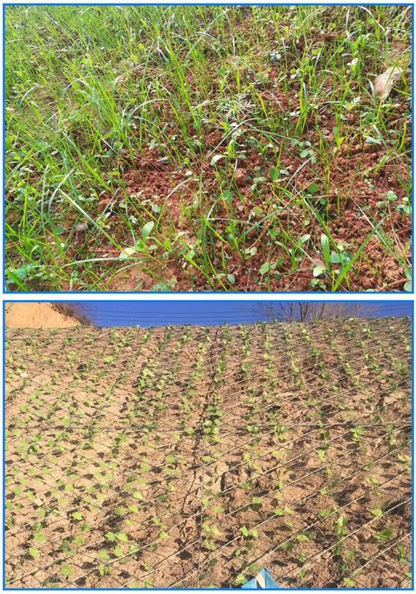 阜阳客土喷播 山体护坡生态修复绿化 客土喷播防护